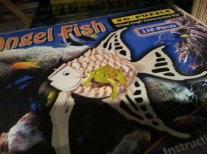 Frogandfish